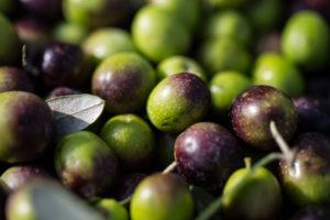 Pickled olive